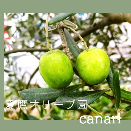 can with canari