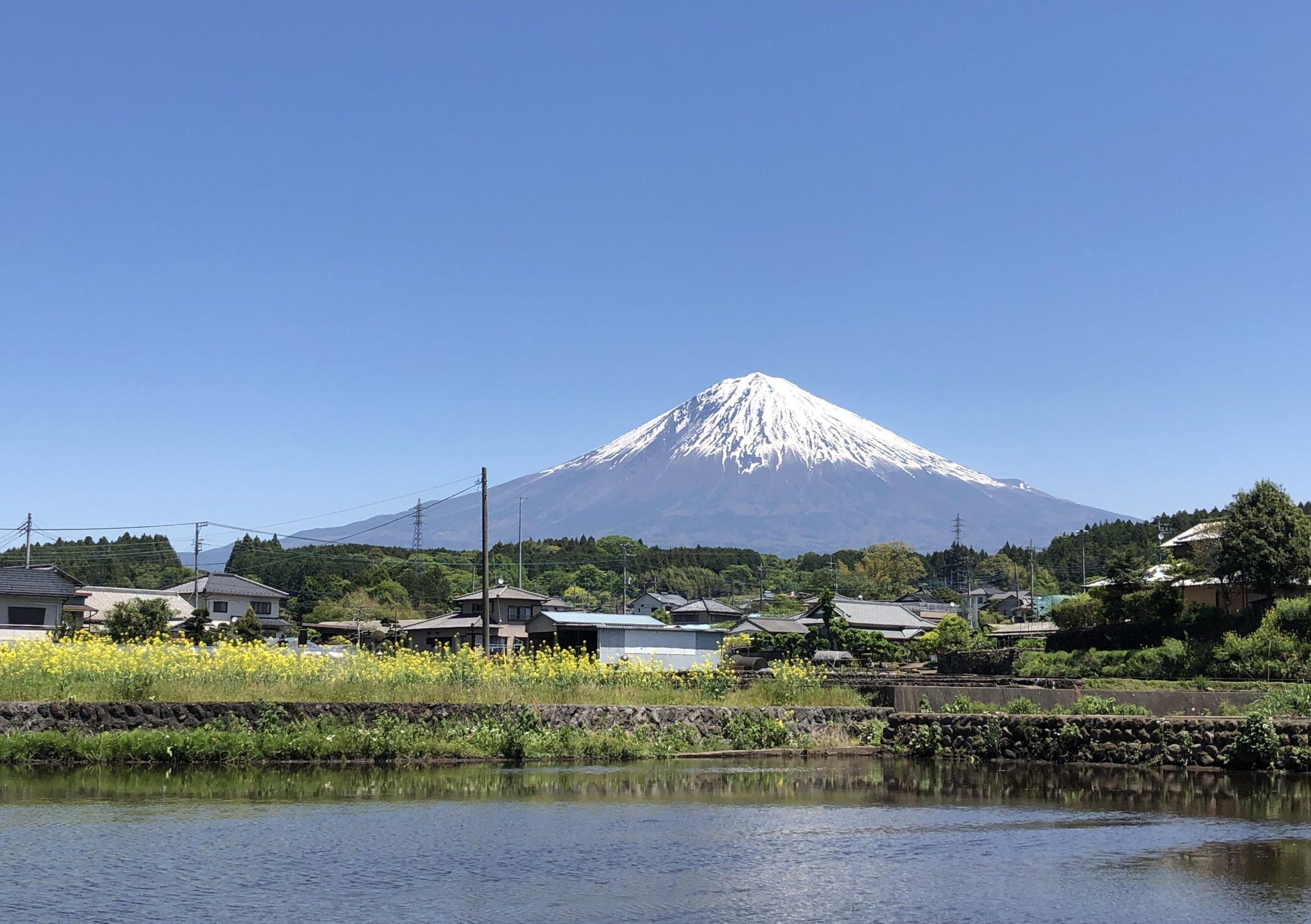 富士山とオリーブ