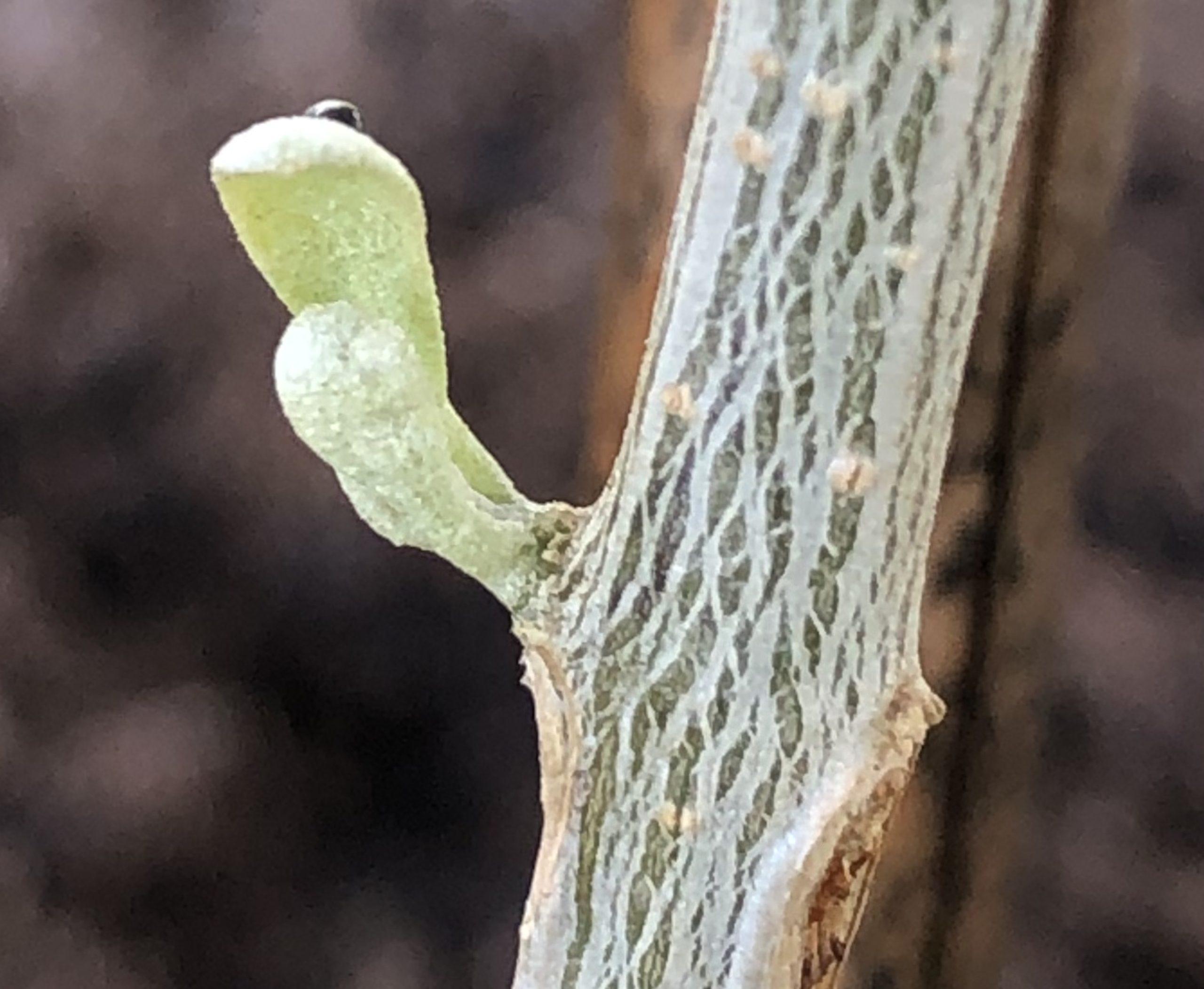 オリーブ生育の条件